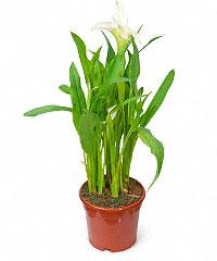 Живые цветы в горшках уфа где в ульяновске можно купить цветы