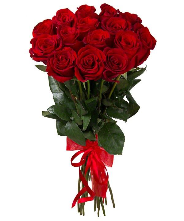 роза турецкая фото