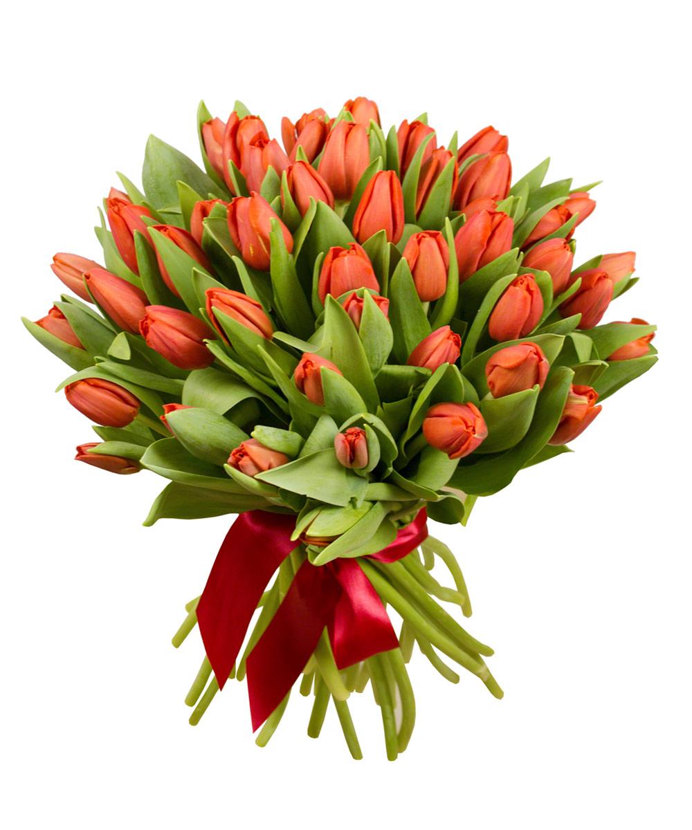 никогда букет тюльпанов картинки фото основе этих внешних